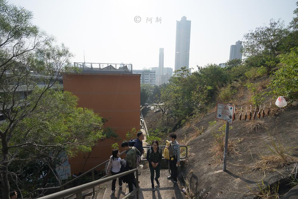 香港嘉頓山晨運徑,嘉頓山晨運徑,深水埗嘉頓山晨運徑,香港旅遊-05