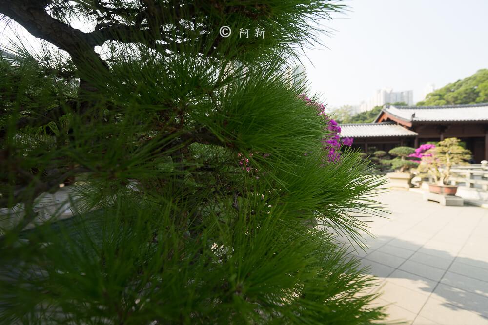 香港西蓮園-18