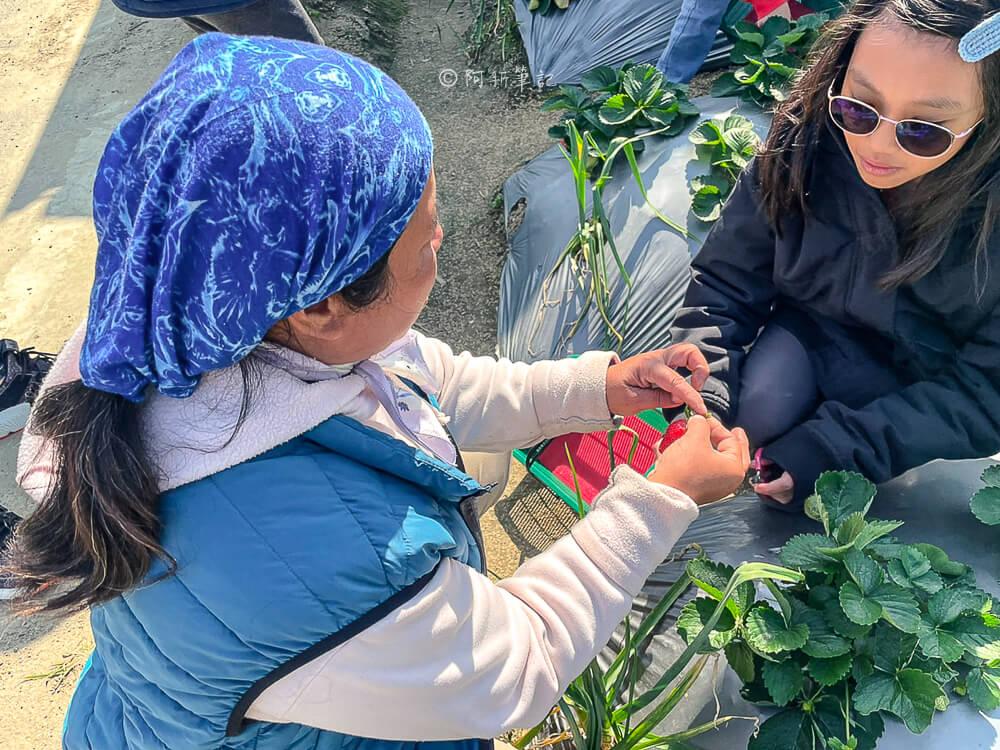 大湖草莓,大湖草莓產季,大湖草莓2020,大湖草莓價錢,苗栗大湖草莓介紹,大湖草莓農場,大湖草莓品種,大湖草莓宅配