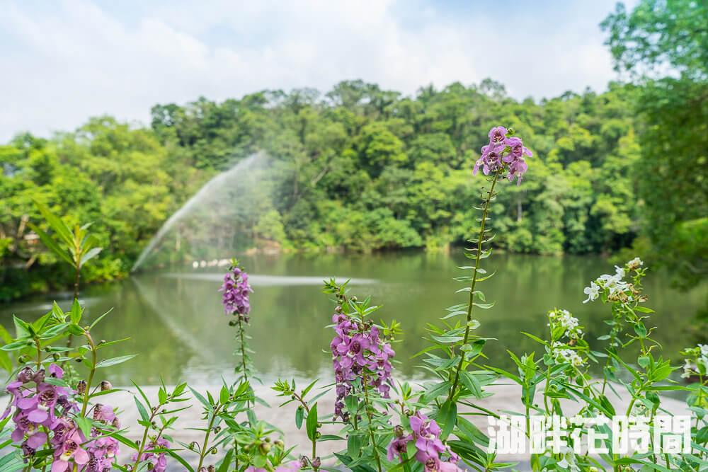 湖畔花時間 |苗栗大湖景點推薦,苗栗人都不知道的深山溫泉、下午茶,渡假來這裡~