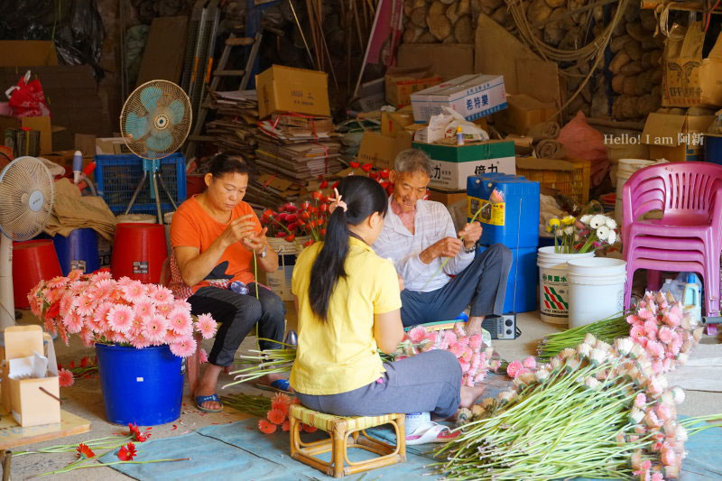 埔里太平社區百香果-05