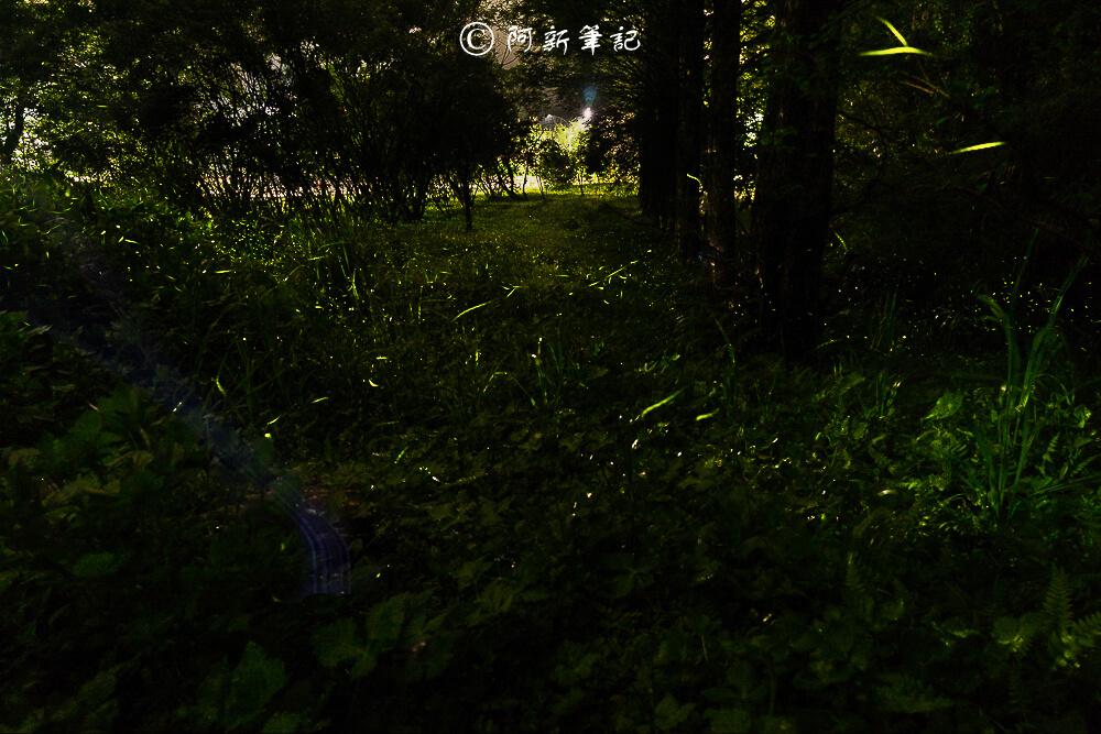 鹿谷景點,2019螢火蟲,南投三天兩夜,溪頭三天兩夜