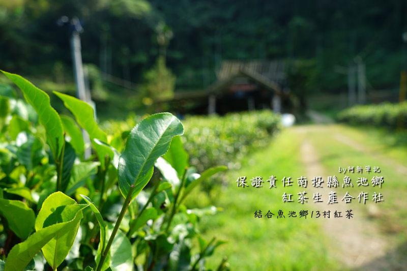 保證責任南投縣魚池鄉紅茶生產合作社|結合魚池鄉13村,這裡是紅茶集合販售區。