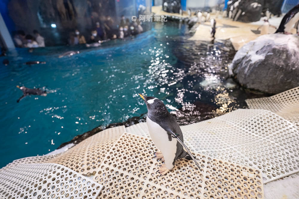 屏東餵企鵝,屏東餵食企鵝,KLOOK餵企鵝,企鵝klook,企鵝餵食,企鵝餵食秀,企鵝餵食體驗,屏東海生館 企鵝餵食,我與企鵝的0.1毫米,屏東海生館企鵝,海生館 企鵝餵食,海生館 企鵝餵食解說,海生館 餵企鵝,海生館企鵝,海生館企鵝區,海生館企鵝餵食