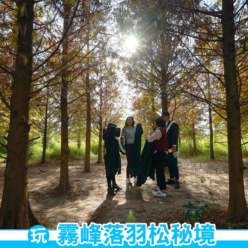 霧峰落羽松秘境-01