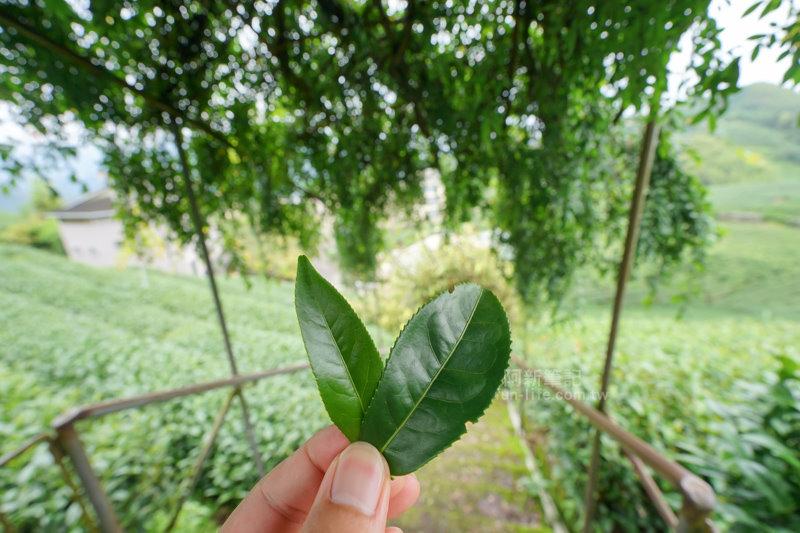 林園製茶-05