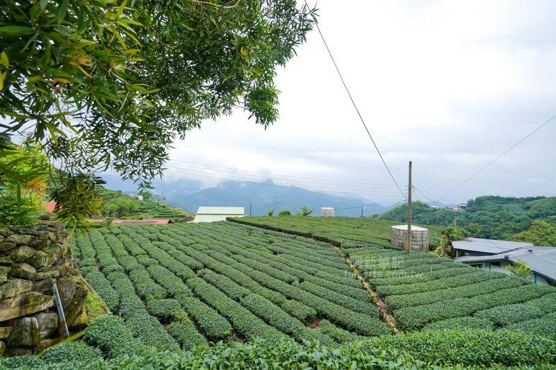 林園製茶-08