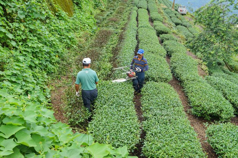 林園製茶-09