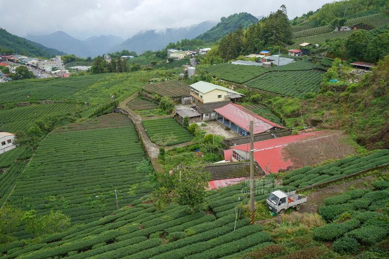 林園製茶-12