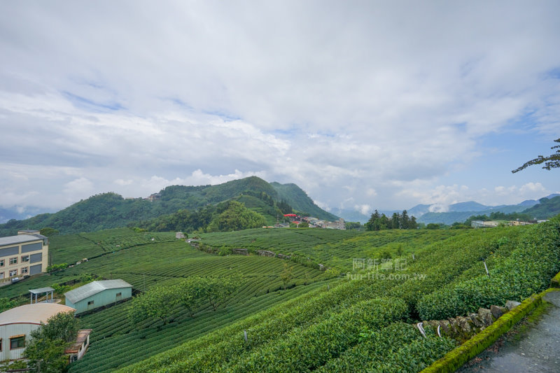 林園製茶-29