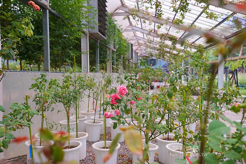 蘿莎玫瑰莊園-38