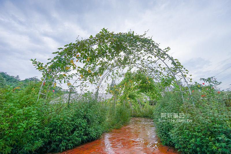 蘿莎玫瑰莊園-33