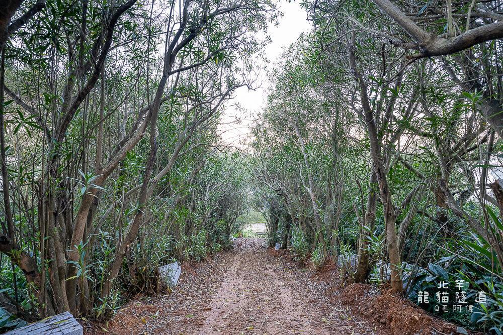 北竿龍貓隧道 |馬祖私房景點推薦,龍貓卡通中的夢幻綠色隧道,原來在這裡!