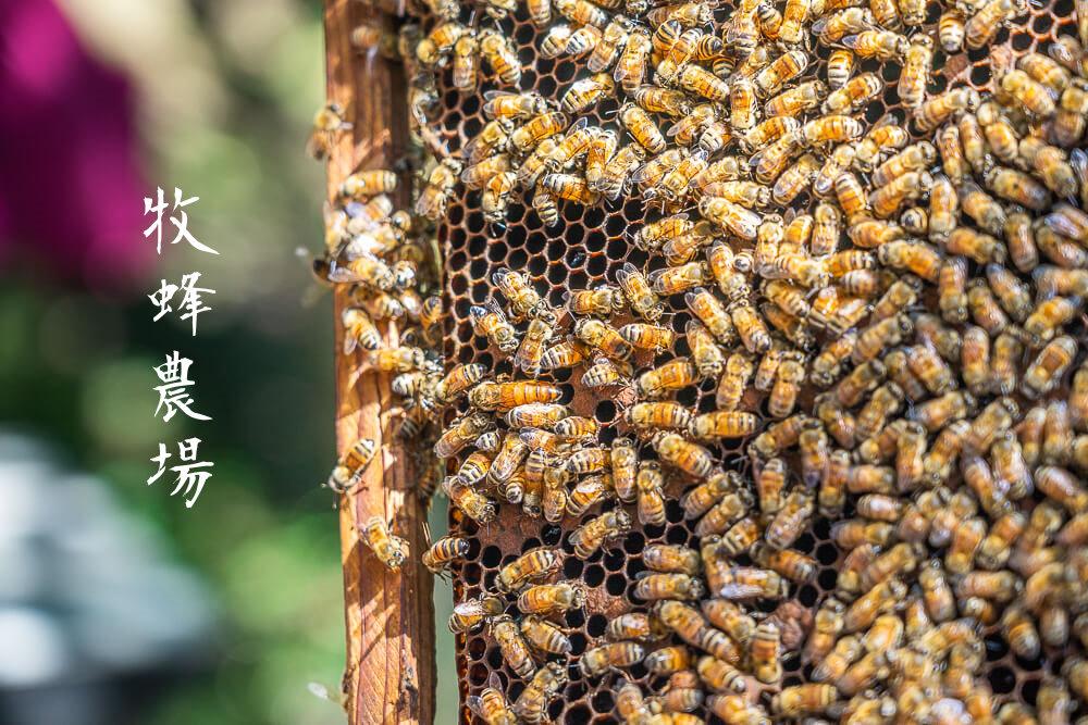 牧蜂農場 |新北親子旅遊推薦有深度、有樂趣、有美食的牧蜂農場,走一趟有內涵的新北景點吧!