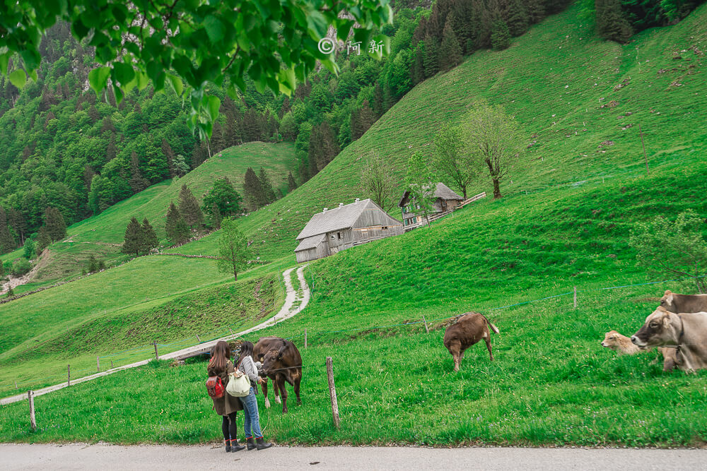 瑞士阿彭策爾塞阿爾卑湖,Seealpsee,塞阿爾卑湖,瑞士Seealpsee,瑞士塞阿爾卑湖,瑞士希阿爾卑湖,希阿爾卑湖-06