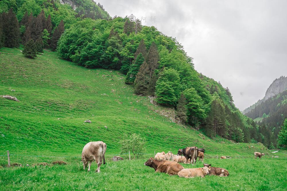 瑞士阿彭策爾塞阿爾卑湖,Seealpsee,塞阿爾卑湖,瑞士Seealpsee,瑞士塞阿爾卑湖,瑞士希阿爾卑湖,希阿爾卑湖-43