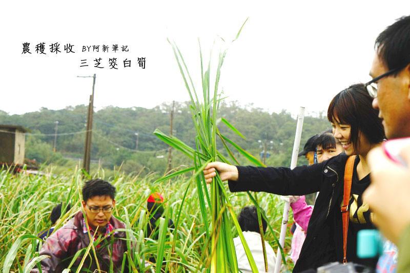 台灣好行-皇冠北海岸線-02