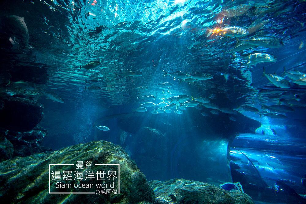 暹羅海洋世界,暹羅海洋世界siam ocean world,暹羅海洋世界Siam ocean world,Siam ocean world,Ocean world,暹羅海洋世界交通方式,暹羅海洋世界門票,海洋世界,暹羅海洋世界 交通,曼谷自由行,曼谷景點,暹羅海洋世界評價,暹羅海洋世界 2020,曼谷旅遊